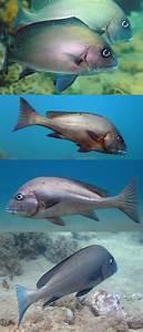Gaterins  Mayotte