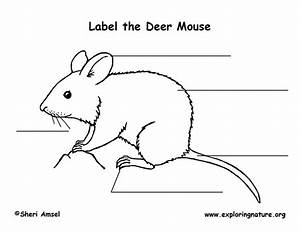 Mouse Labeling Page