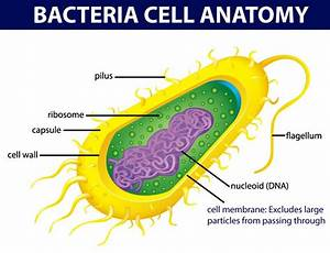 Bacterial Cell Anatomy