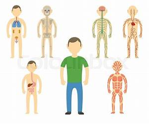Cartoon Man Body Anatomy  All Body Systems