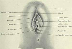 Vaginal Orifice
