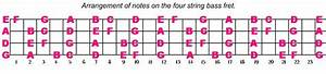 4 String Notes On A Bass Guitar