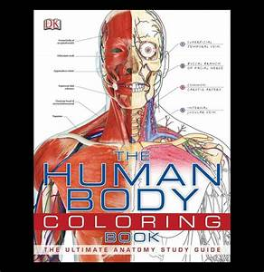 The Human Body Coloring Book In 2020