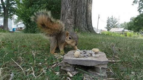 une baise au bureau un écureuil baise une éra gopro