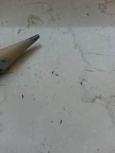 Mini Fliegen Am Fenster : kleine schwarze tiere was sind das f r viecher natur insekten ungeziefer ~ Watch28wear.com Haus und Dekorationen
