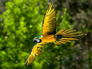 cats,parrots and butterflies images Blue-and-yellow Macaw ...