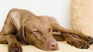 Hundehaltung Mietwohnung 2017 : darf der vermieter hundehaltung verbieten wohnen ~ Lizthompson.info Haus und Dekorationen