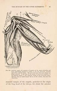 Something  I Guess  U2022 Scientificillustration  Bird Anatomy