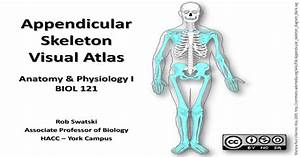 Appendicular Skeleton Anatomy Visual Guide