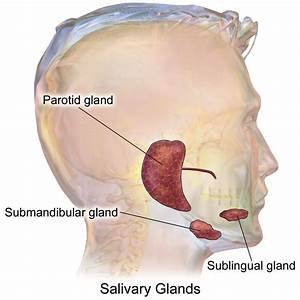 Infected Salivary Gland  U2014 Entsho Com