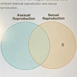A Student Makes A Venn Diagram As A Study Aid To Compare