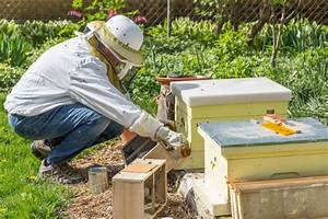 The Beginners Guide On How To Install Package Bees