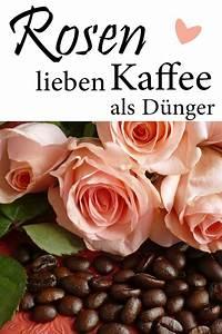 Kaffeesatz Als Dünger : rosen m gen kaffeesatz als d nger kaffeesatz bl hende ~ Watch28wear.com Haus und Dekorationen