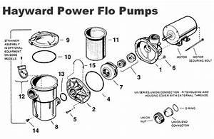 29 Hayward Pump Parts Diagram