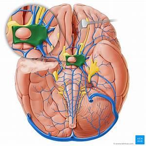 Cavernous Sinus  Anatomy