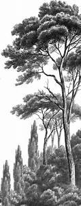 Papier Peint Arbre Noir Et Blanc : papier peint panoramique pins et cypr s noir et blanc ananb papier peint panoramique scenic ~ Nature-et-papiers.com Idées de Décoration