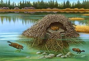 Beaver Lodge Cutaway Finished