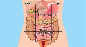 Map Of Stomach Organs
