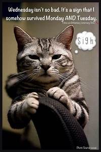 Wednesday humor   Animal funny   Cute cat   Not so bad ...