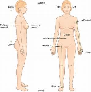 Anatomical Terminology  U00b7 Anatomy And Physiology