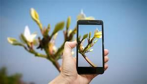 Blumen Erkennen App : die app die pflanzen rettet diagnose tool f r ~ A.2002-acura-tl-radio.info Haus und Dekorationen