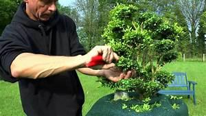 Buchsbaum Schneiden Formen : buchsbaum schneiden boxwood cutting buxus style youtube ~ A.2002-acura-tl-radio.info Haus und Dekorationen