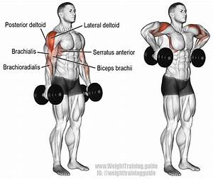 Dumbbell Armpit Row Instructions And Video
