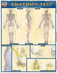 Anatomy Test
