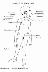 Lymphadenopathy  Enlarged Lymph Nodes   U2013 Peds  U0026 Adults