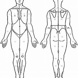 33 Body Diagram For Pain