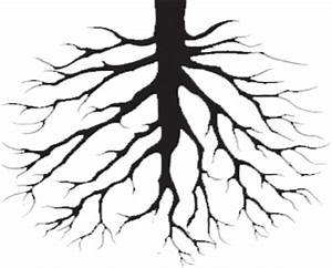 Tree Drawings With Roots - ClipArt Best