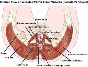 topics core With pelvic floor muscles pain