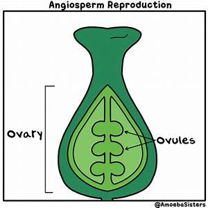 Angiosperm Reproduction In A Gif  More Science Gifs At