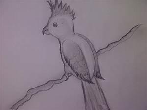 Bilder Zeichnen Für Anfänger : einen papagei zeichnen v gel zeichnen f r anf nger zeichnen lernen ~ Frokenaadalensverden.com Haus und Dekorationen