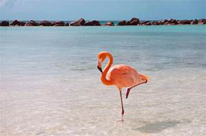 Ask Smithsonian: Why Do Flamingos Stand on One Leg? | At ...