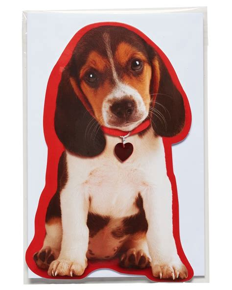 Maybe you would like to learn more about one of these? Puppy Valentine's Day Card | American Greetings