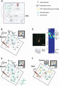 Genetic Dissection Of Neural Circuits  Neuron