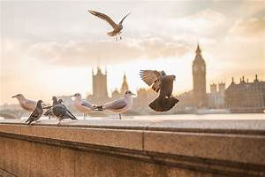 Tauben Vertreiben Geruch : tauben und andere v gel vertreiben ausf rlicher ratgeber 2019 ~ Eleganceandgraceweddings.com Haus und Dekorationen