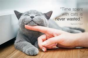 45 Best Cat Quotes for Every Occasion | Shutterfly