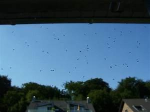 Mini Fliegen Am Fenster : tausende minifliegen am fenster mein sch ner garten forum ~ Watch28wear.com Haus und Dekorationen