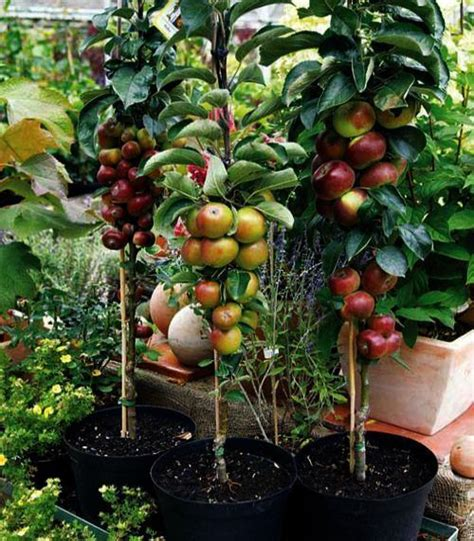 Small balcony garden ideas philippines. Garden Landscape Ideas In Philippines + Urban Gardening ...