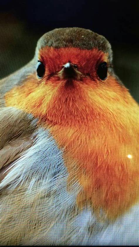 Here are only the best bird desktop wallpapers. Pin by Anne on Robins (With images) | Beautiful birds, Birds, Animals