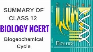 Summary Of Biology Ncert Class 12