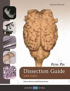 Fetal Pig Dissection Guide With Index  9780738079998