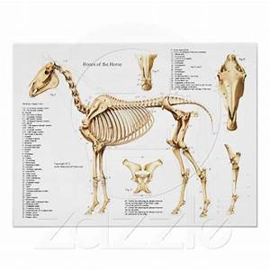 1213 Best Images About Horse Reference Photos On Pinterest