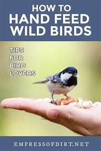10 Tips For Hand Feeding Wild Birds