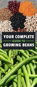 How To Grow Beans  The Ultimate Guide  Updated February 2018