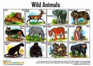 Kids Science Projects - Wild Animals - free download