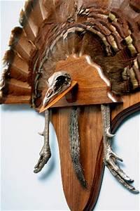 turkey fan mount template gallery template design ideas With turkey fan mount template