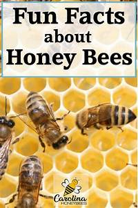 103 Bee Facts